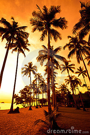 Free Coconut Palms On Sand Beach In Tropic On Sunset Royalty Free Stock Photo - 12901155