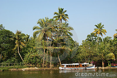 Coconut palms on the shore of the lake