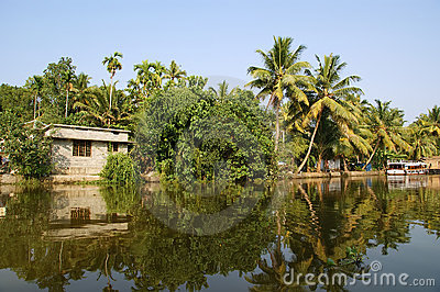 Coconut palms on the shore of the lake. India