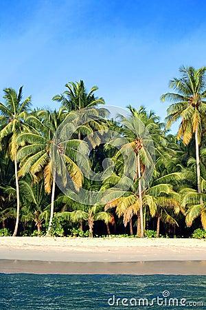 Coconut palms tropical paradise