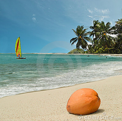 Coconut on paradise beach