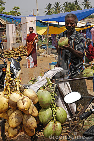 Coconut seller India Editorial Photography