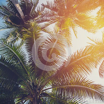 Free Coconut Tree At Tropical Coast With Vintage Tone Royalty Free Stock Photos - 113503638