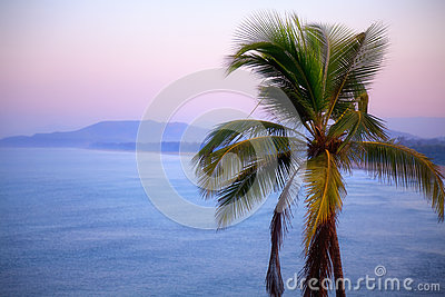 Coconut tree on background of sea and mountains