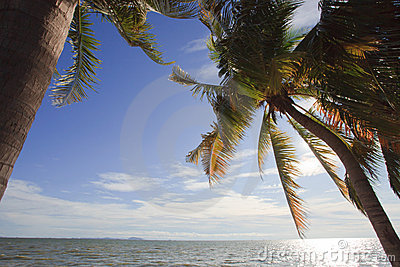 Coconut tree beside  beach