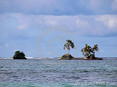 Coconut tree island