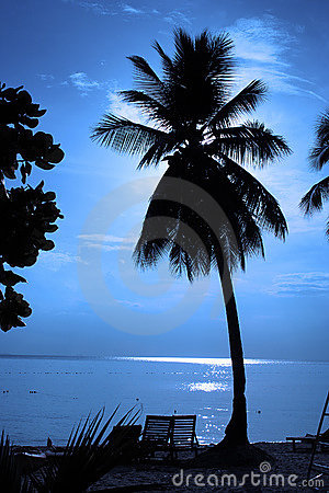 Coconut Tree Silhouette