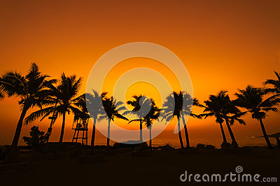 Coconut tree silhouette on paradise sunset