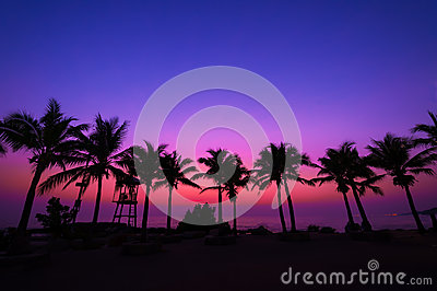 Coconut tree silhouette with sunset