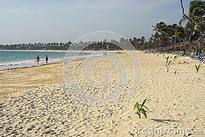 Coconut trees on beaches