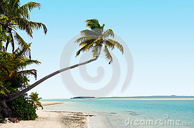 Coconut trees on deserted tropical island