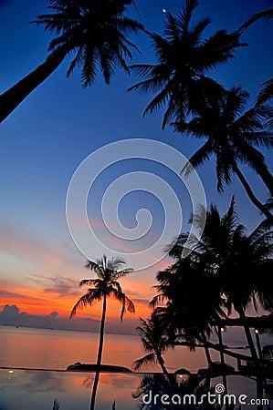 Coconut trees at sundown