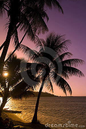 Coconut trees at sunset moorea