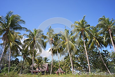 Coconut trees and wooden huts by the beach