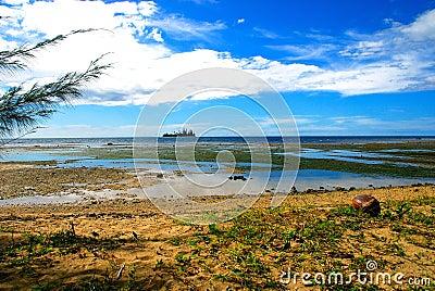 Coconuts beach