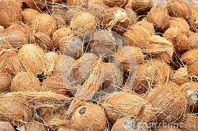 Coconuts, cleaned from external skin