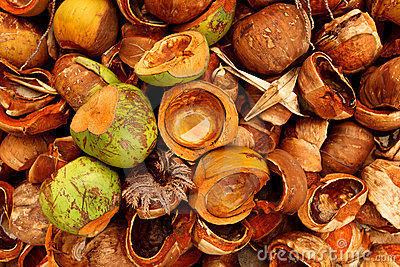 Coconuts detail