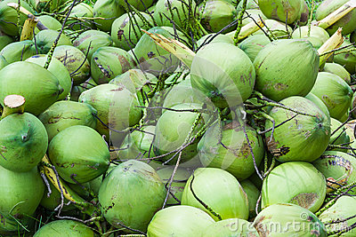 Coconuts fruit