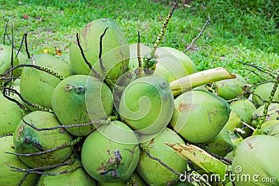 Coconuts fruit