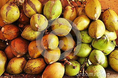 Coconuts fruit shop