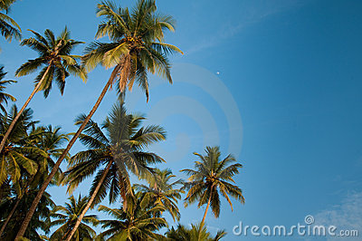 Coconuts and the moon