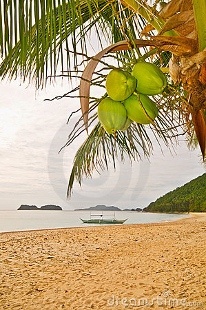 Free Coconuts On A Beach Stock Image - 10387871