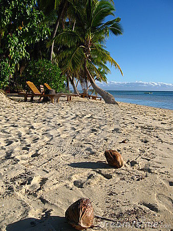 Free Coconuts On The Tropical Beach Stock Photos - 11095363