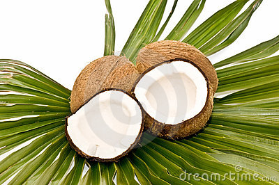 Coconuts and palm