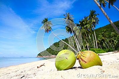 Coconuts at paradise beach