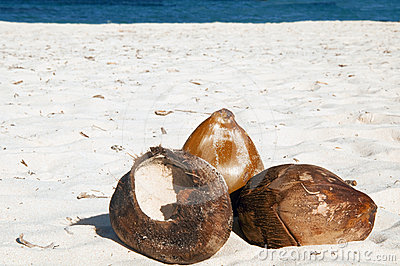 Coconuts on sand
