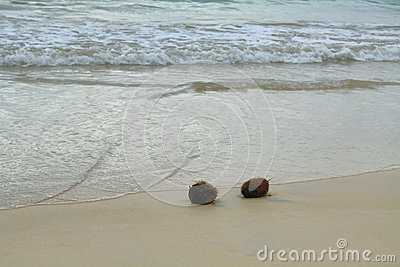 Coconuts in the sand at Floreana island