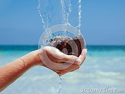 Coconuts in sea