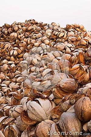 Coconuts shells
