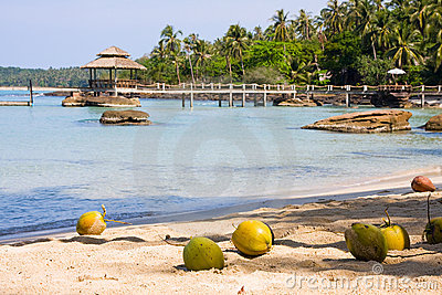 Coconuts on the shore