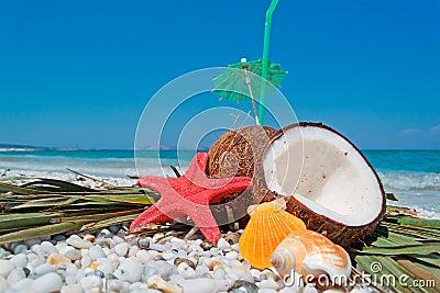 Coconuts, starfish and shells