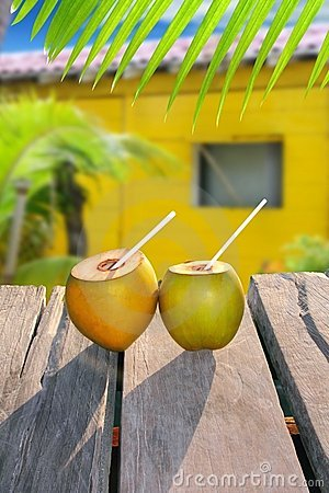 Coconuts straw cocktail tropica yellow house