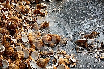 Coconuts at Thaipusam