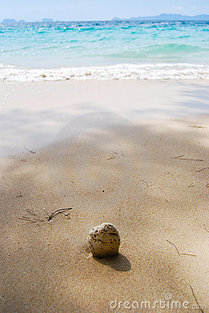 Coconuts to the sea.
