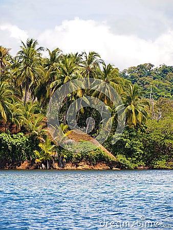 Coconuts tree hill