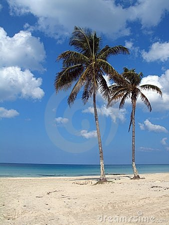 Coconuts on tropical beach