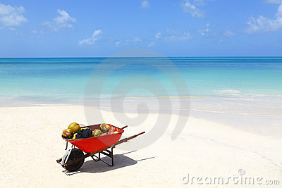 Coconuts tropical beach