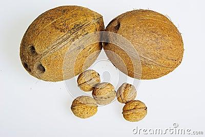 Coconuts and walnuts