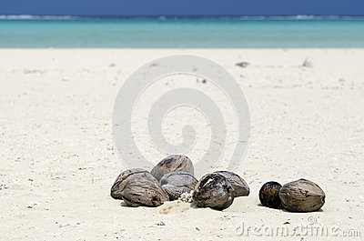 Coconuts on white sand