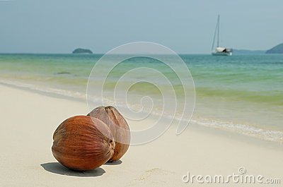 Coconuts on the white sandy beach of Thailand