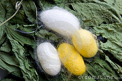 Cocoon in yellow and white color