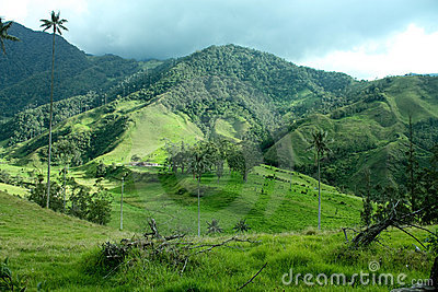 Cocora valley, Andes, Colombia