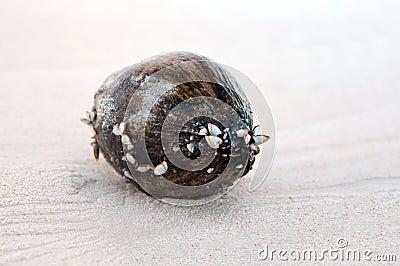 Cocos en la arena
