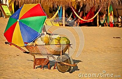 Cocos frescos para a venda na praia mexicana