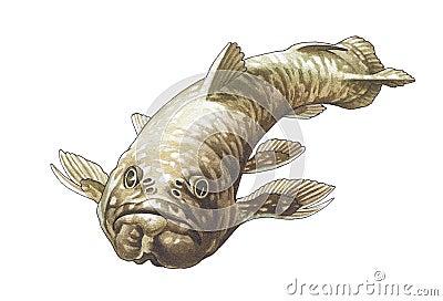 Coelacanth. Latimeria.
