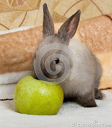Coelho bonito com a maçã verde